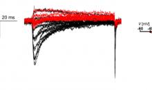 QPatch IIを利用したiPS心筋細胞の記録:50%の成功率