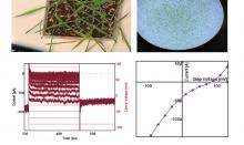 QPatch IIを用いた植物細胞からの電気生理学的記録